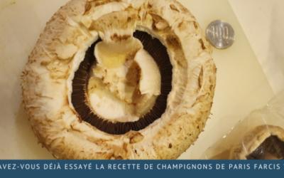 Avez-vous déjà essayé la recette de champignons de Paris farcis?